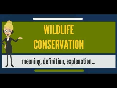 What is WILDLIFE CONSERVATION? What does WILDLIFE CONSERVATION mean? WILDLIFE CONSERVATION meaning