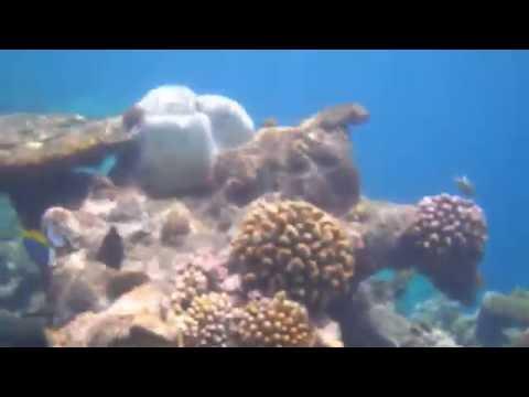 Leica X-U (Typ 113) - Unterwasser Video Test - Schnorcheln am Riff