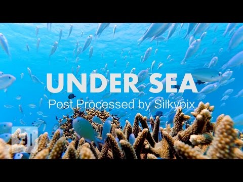 UNDER SEA | YI Action Cam | YI