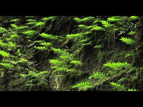 4K Japan Prajna-Paramita Hrdaya Sutram - Imee Ooi - Canon EOS-1D C VIDEO ( - RINNE - )