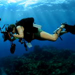 underwater photography, nature photography, ocean photography, marine photography, photography tips