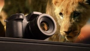 Suzi Eszterhas: Wildlife Photographer and Conservationist