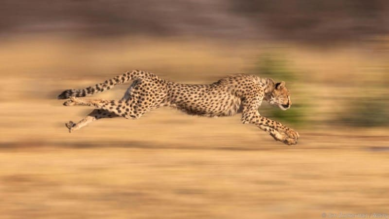 photography tips, shutter speed, portraying motion