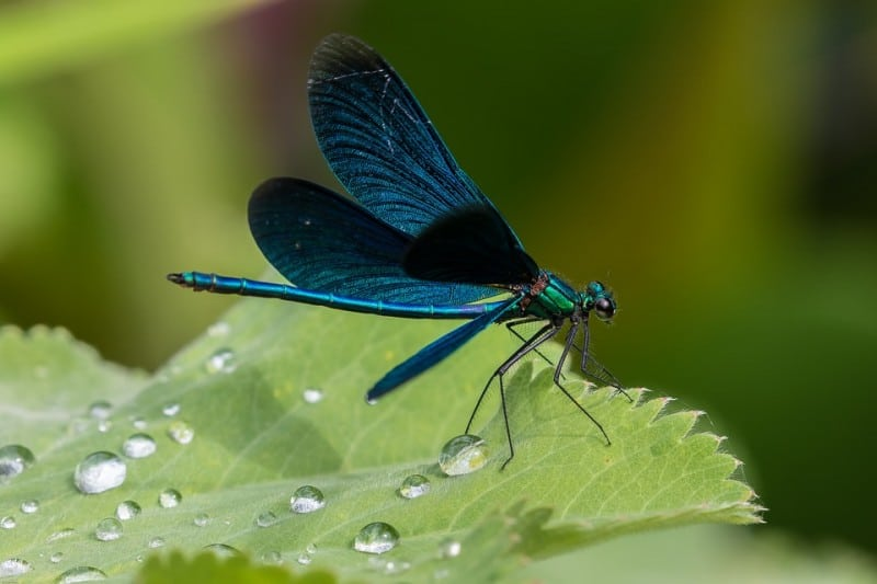 macro photography, photography tips, insect photography