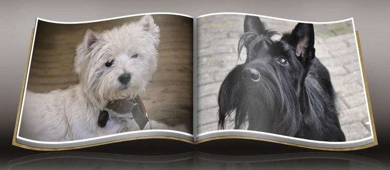 dog photos, pet photos, photography techniques