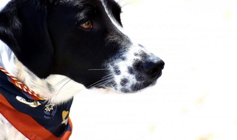pet photography, animal photography, photography tips