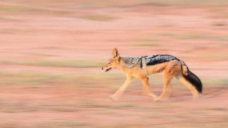 The Art of Panning: Top Tips to Capture Motion