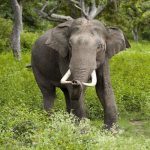 3 Wildlife Conservation Initiatives that Needs the World's Support