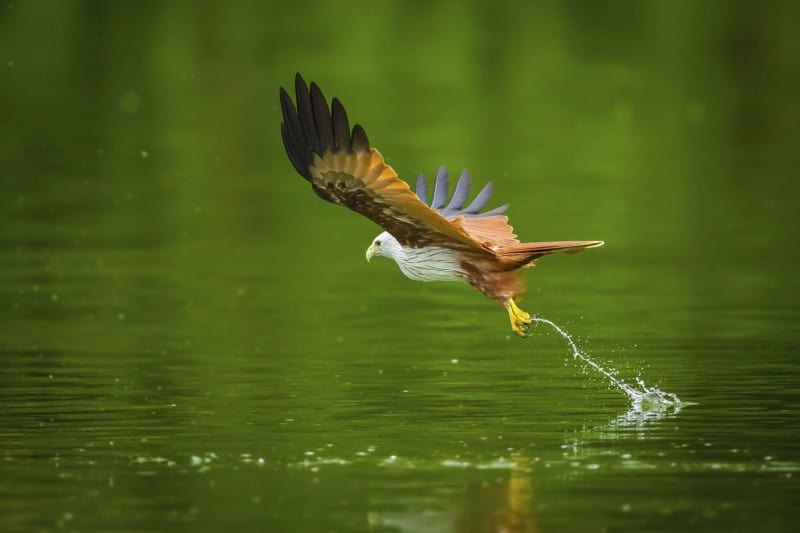 5 Tips to Get You Started on Wildlife Photography
